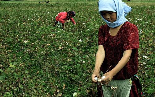 TAJIKISTAN_Cotton_Harvest